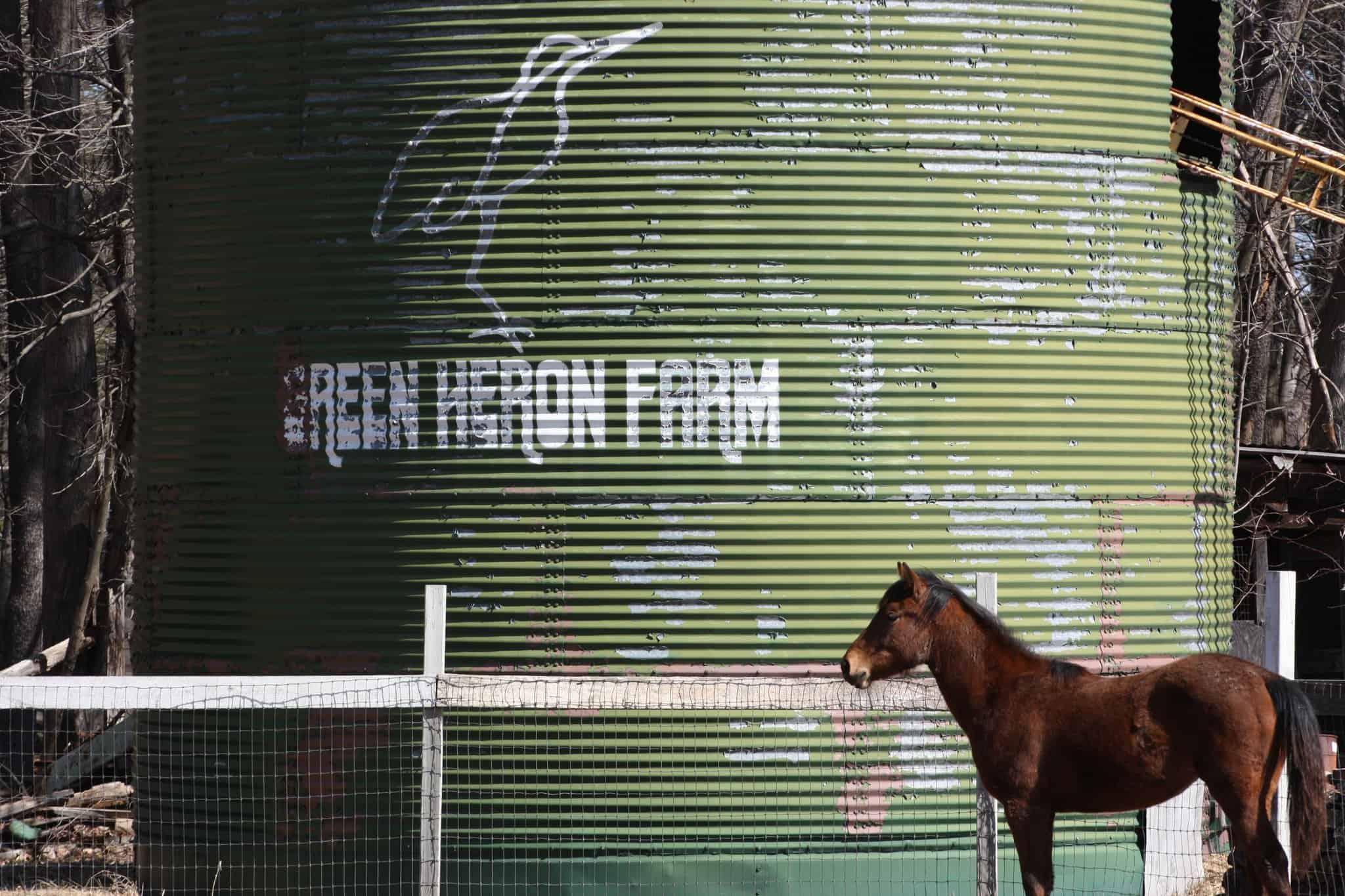 horse next to silo